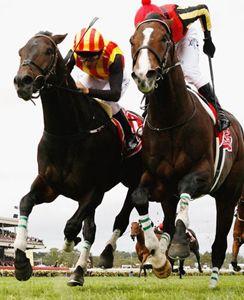 melbourne_cup_horses