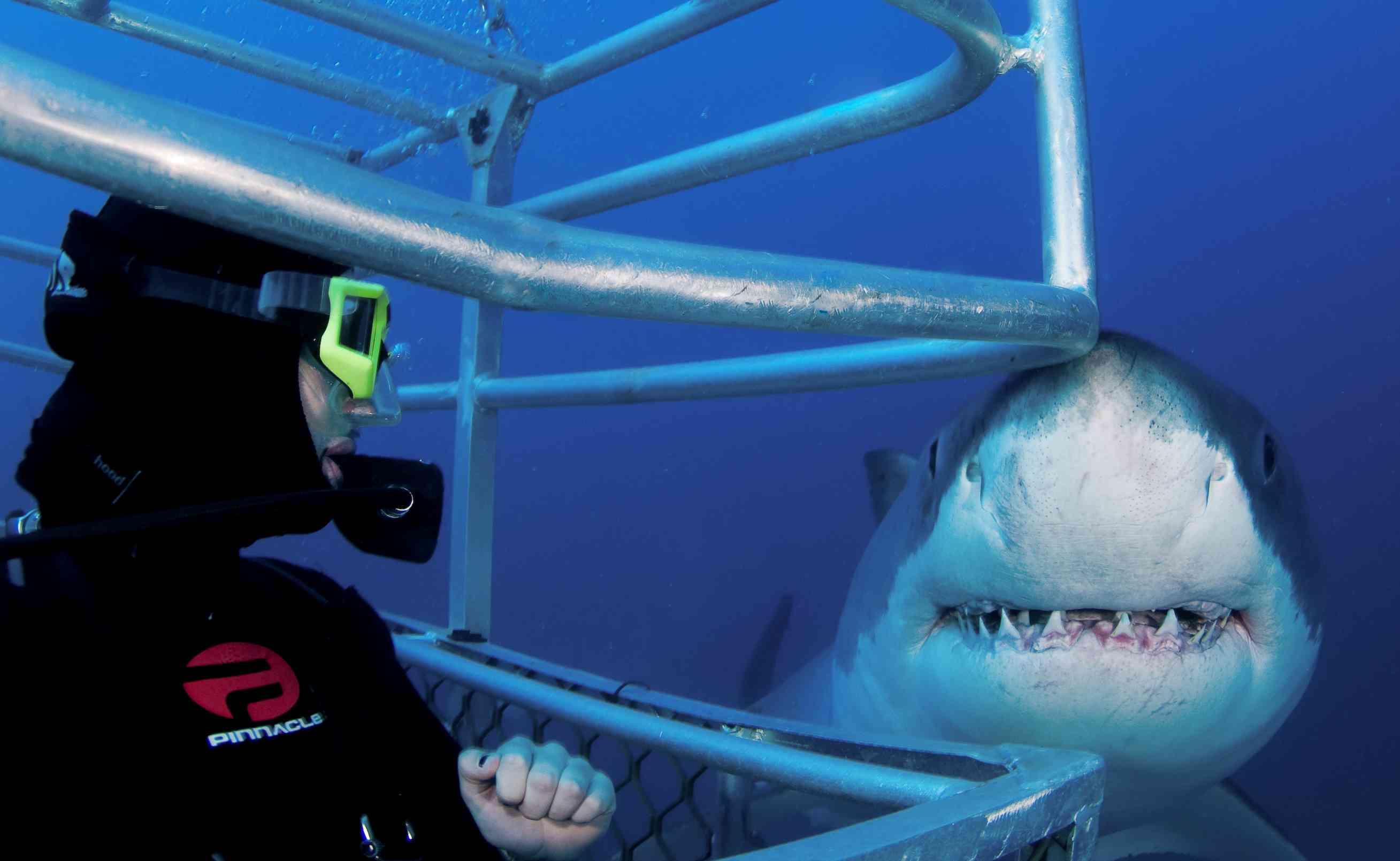 Rodney Fox Shark, Shark Ocean Floor Cage