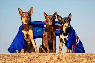 How To Take Great Photos of Your Dog - Australia Day Style