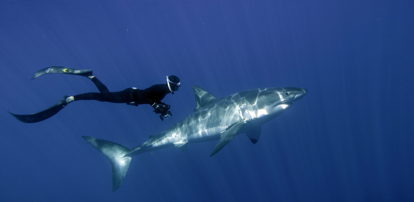 William Winram, freediving, Great White Shark 3D
