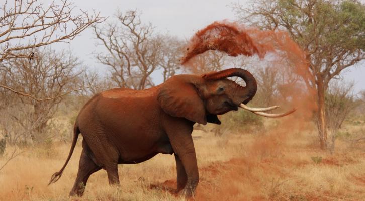 How To Plan The Perfect Safari
