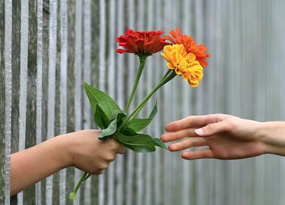 История доставка цветов Львов сотворения цветов