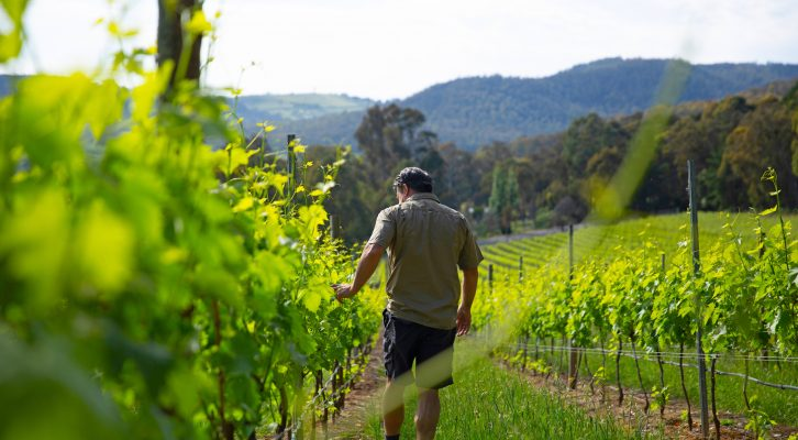 Introducing Behind The Vines: The Local Way To Select Your Next Drop